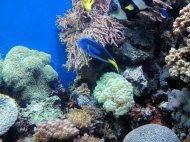 kolorowe rybki