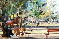 gołębie w parku