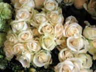 małe białe kwiatki
